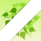 Frisch hintergrund grün birke laub. — Stockvektor