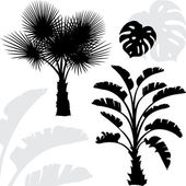 Palm trees black silhouettes on white background. — Stock Vector