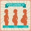 Stock Vector: Silhouette of pregnant womin three trimesters.