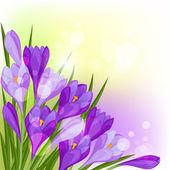 Spring flowers crocus natural background. — Stok Vektör
