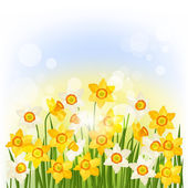 Spring flowers narcissus natural background. — Stockvektor