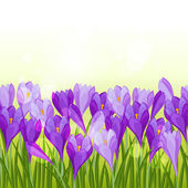 Spring flowers crocus seamless pattern horizontal border. — Stock vektor