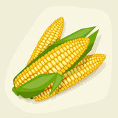 Stylized vector illustration of fresh ripe corn cobs. — Stock Vector