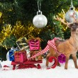 Foto de Stock  : Christmas gifts on sledge
