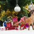 Foto Stock: Christmas gifts on sledge