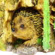 Stock Photo: Hedgehog in burrow