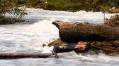 Stormiga berg floden — Stockfoto