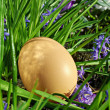 Egg on grass and flowers - Stock Photo