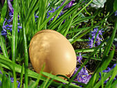 Egg on grass and flowers — Stock Photo