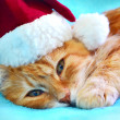 Stock Photo: Funny cat in SantClaus red hat