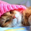 Funny cat in the pink hat — Stock Photo