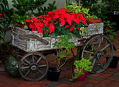 Bright red flowers in an old wooden cart — Foto Stock