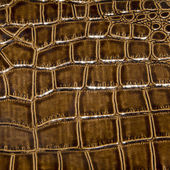 Crocodile leather detail — Stock Photo