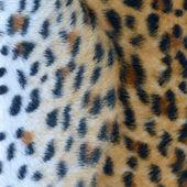 Decorative leopard texture squared — Stock Photo