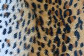 Decorative leopard texture — Stock Photo