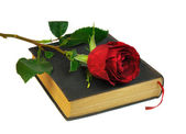 Rose and Book — Stock Photo
