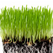 Stock Photo: Green grass with ground