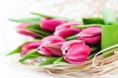Pink tulip — Stock Photo