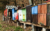 Colorful bee hives — Stockfoto