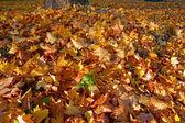 Fallen leaves in autumn. — Stock Photo