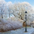 Park in winter. — Stock Photo