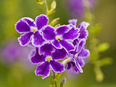 Bunch of purple flowers. — Stock Photo