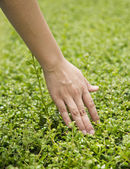 Women hand touching leaves — Stock Photo