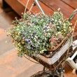 Flower on bike — Stock Photo #33531391