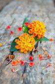 Lantana flower on wood ground — Stock Photo