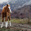 Stock Photo: Young horse on background of mountains