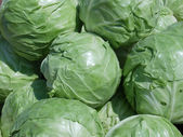 Cabbage. — Stock Photo