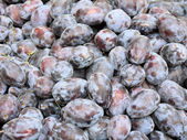 Plums -1 — Stock Photo