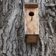 Birdhouse — Stockfoto #30913673