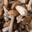 Stock Photo: Mushrooms.