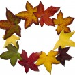 Stock Photo: Autumn leaves circle