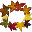 Autumn leaves circle - Foto Stock