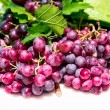 Home grown grapes — Stock Photo