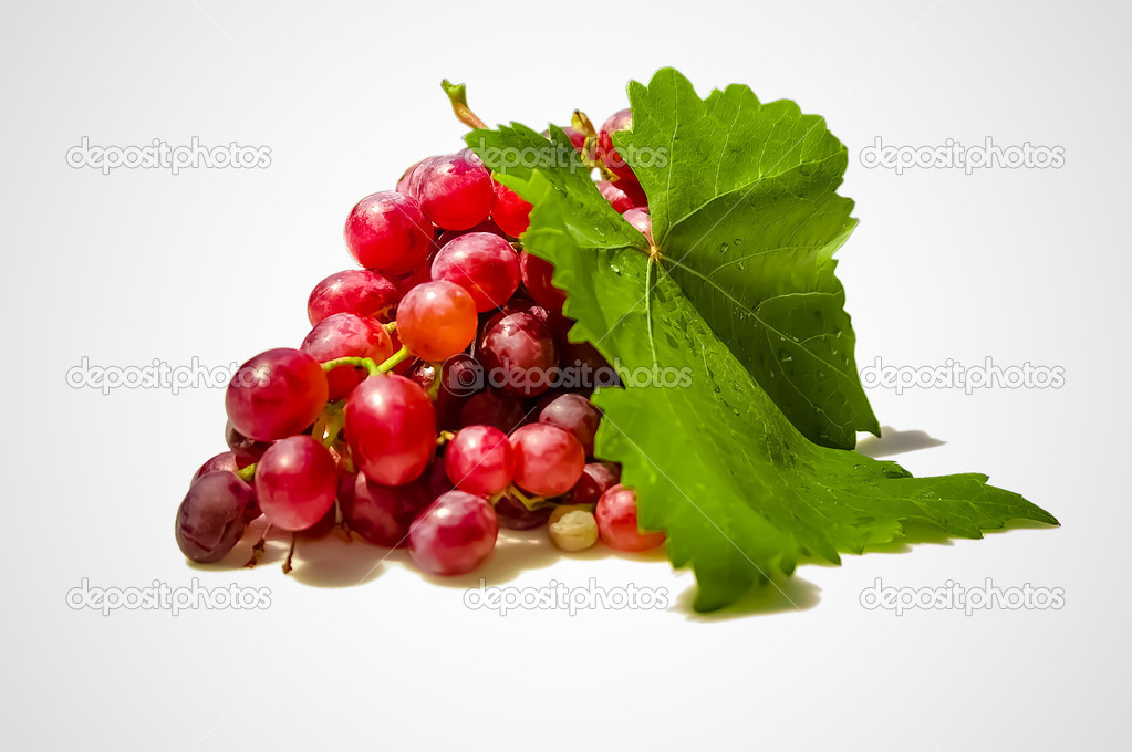 Fresh cutted, home grown red grapes, isolated  Stock Photo #12161821
