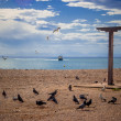 Pigeons at the beach — Foto de Stock