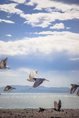 Pigeons at the beach — Stock Photo