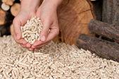 Pellets- biomass — Stock Photo