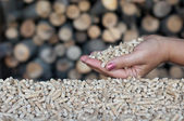 Pellets- biomass — Stock Photo
