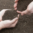 Soil in hands — Stock Photo #18447919
