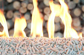 Pine pellets — Stock Photo