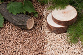 Pine and oak pellets — Stock Photo
