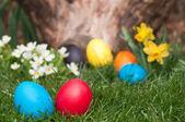 Easter egs — Stock Photo