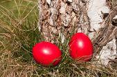 Easter hunt — Stock Photo