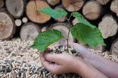 Salvar la naturaleza — Foto de Stock