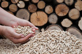 Pelllets- biomass — Stock Photo