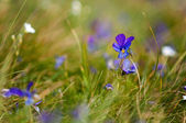 Violet flower — Stock Photo